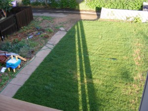 Sod in the backyard